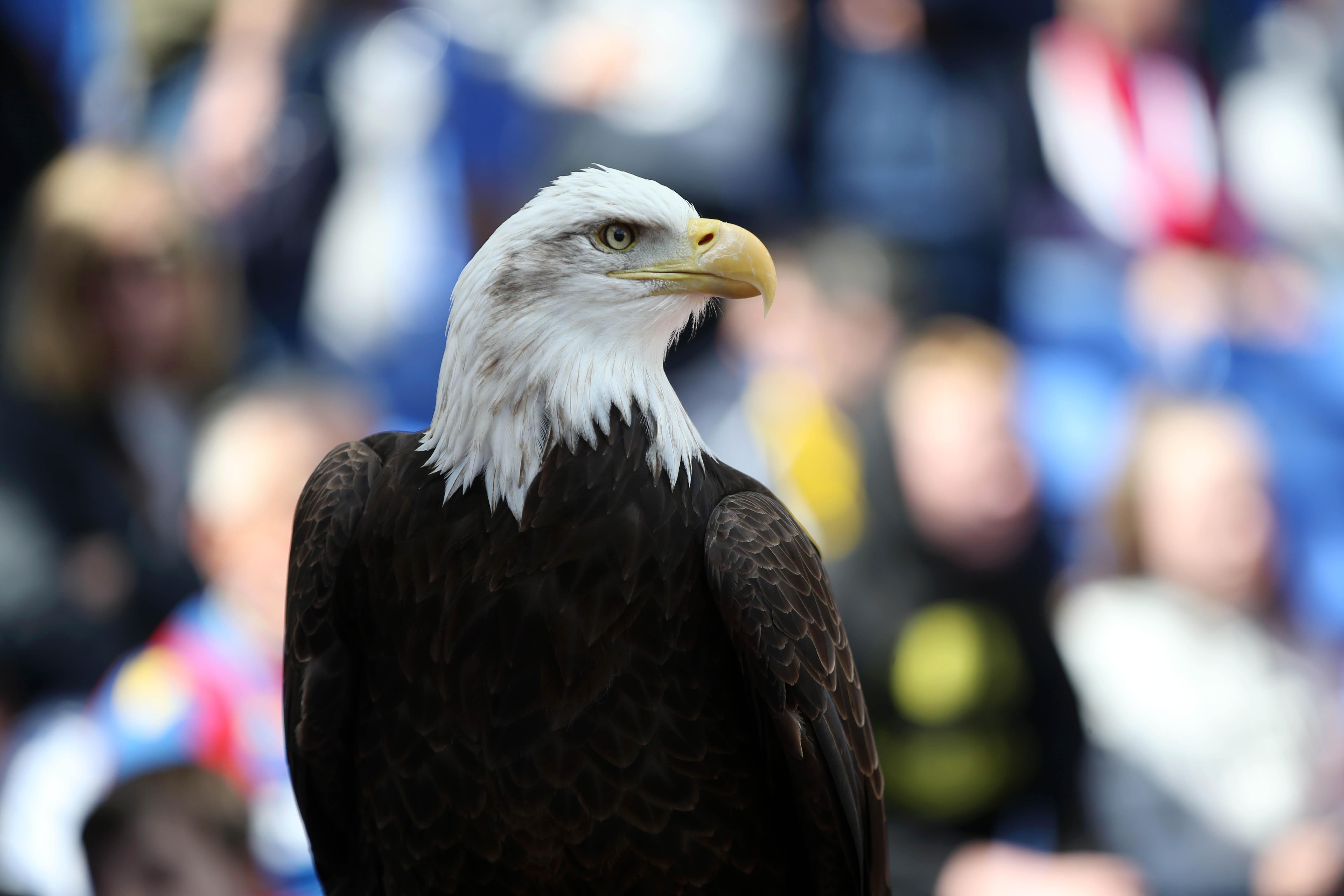 El águila que ilustra al Crystal Palace