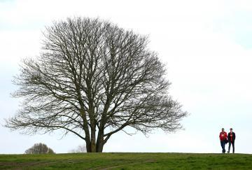 Un árbol de Bournemouth